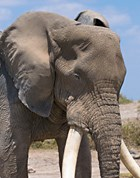 Editors' Blog: An Eden Alternative for elephants