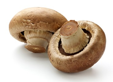 Wild mushrooms kill two senior care residents