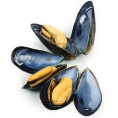 Researchers turn to mussels as a model for bio-adhesives