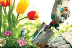 Gardens can ease dementia
