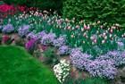 Guest Columns: A blooming idea