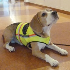 Dogged pursuit sniffs out C. diff