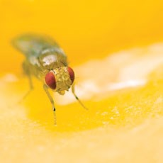 Learning on the fly: Unlikely target for wound care found