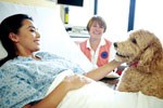Animal therapy reduces pain medication intake, researchers find