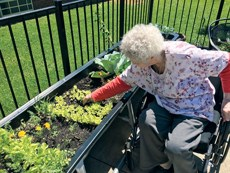 A Liberty resident checks up on greens growing last spring