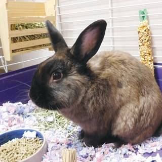 Gurwin's bunny needs a name, and you can help pick it